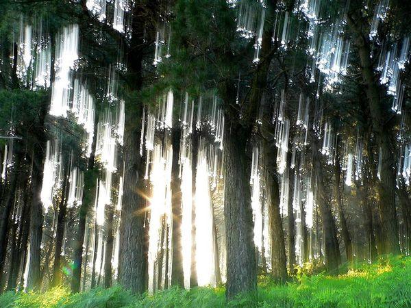 Bosques encantados, tanto reales como no